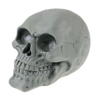 skull ZOELIBAT, ZOELIBAT